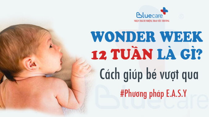 wonder-week-12-tuan-la-gi