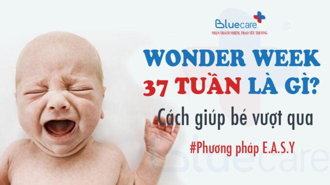 wonder-week-37-tuan-la-gi