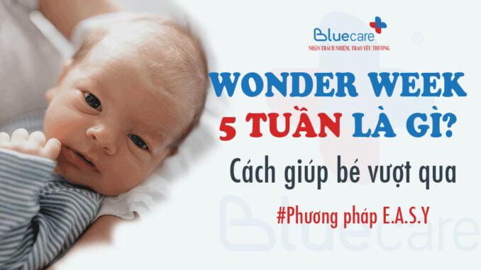wonder-week-5-tuan-la-gi