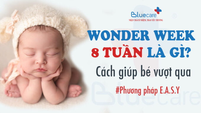 wonder-week-8-tuan-la-gi